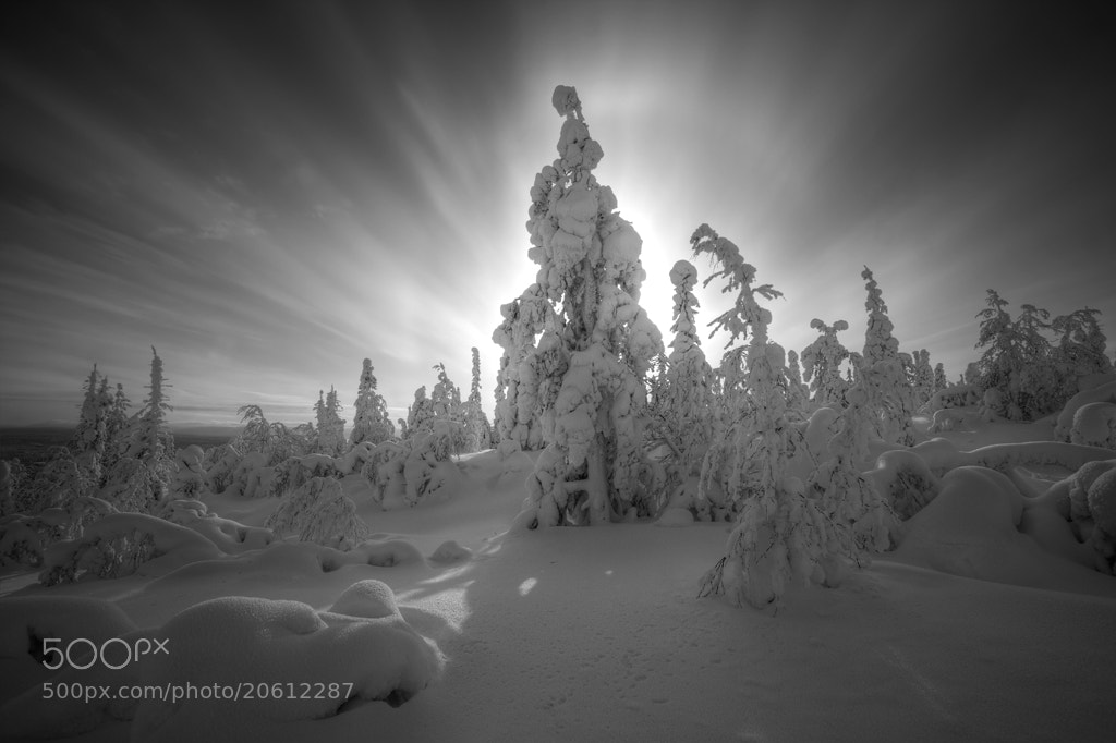 Photograph Winter skog. by Andrey Grivitskiy on 500px