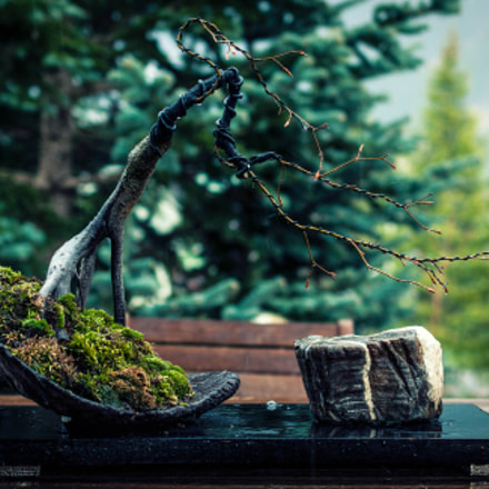 Bonsai with Suiseki, Nikon D90, AF-S DX Micro Nikkor 40mm f/2.8G