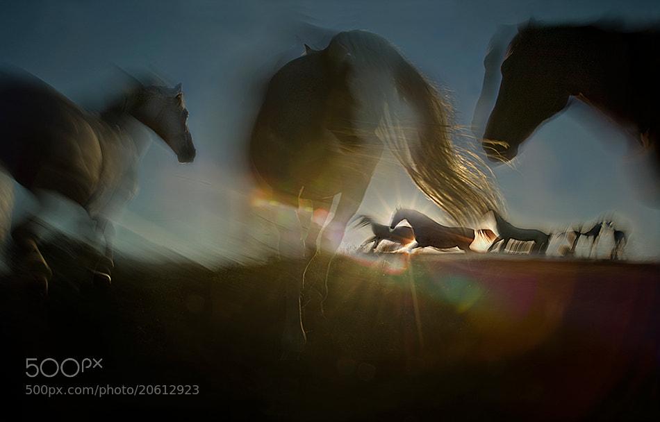 Photograph Shasdows play by Milan Malovrh on 500px