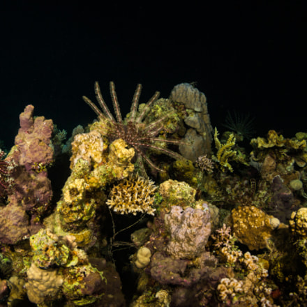 Night coral reef, Canon EOS 5D MARK III, Canon EF 8-15mm f/4L Fisheye USM