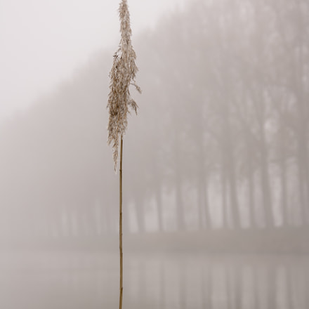 Lonely reed, Samsung NX300