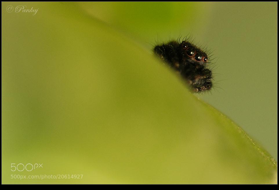 Photograph I'm watching you :-) by Pankaj Baruah on 500px