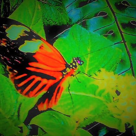 """""""The Butterfly Effect"""", Samsung Galaxy S2 Epic"""