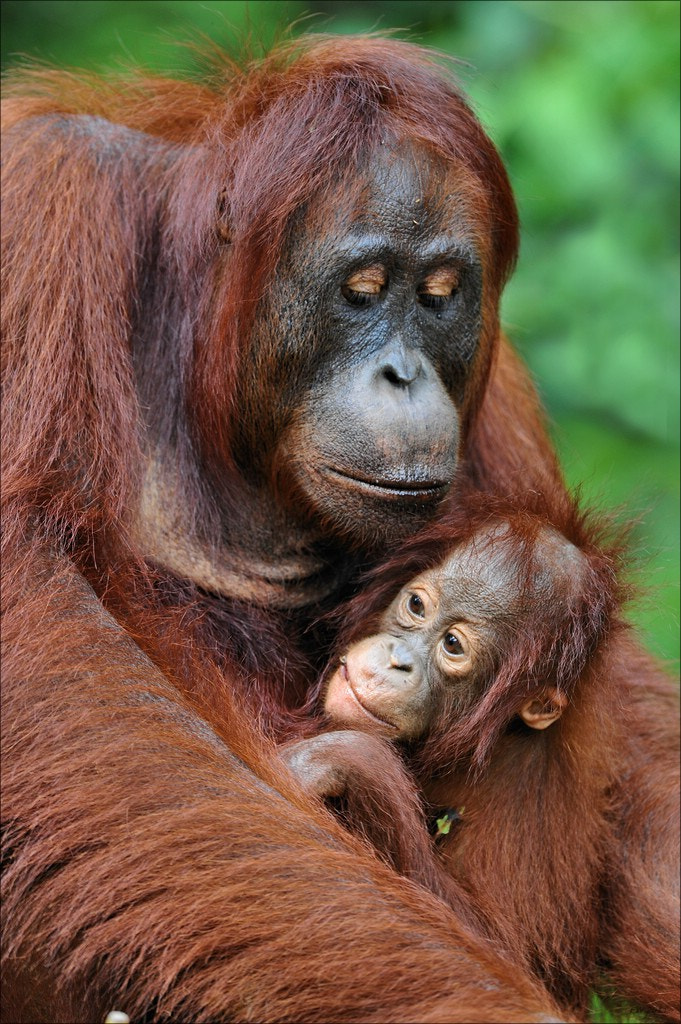 Photograph Mother & Child by Elmar Weiss on 500px