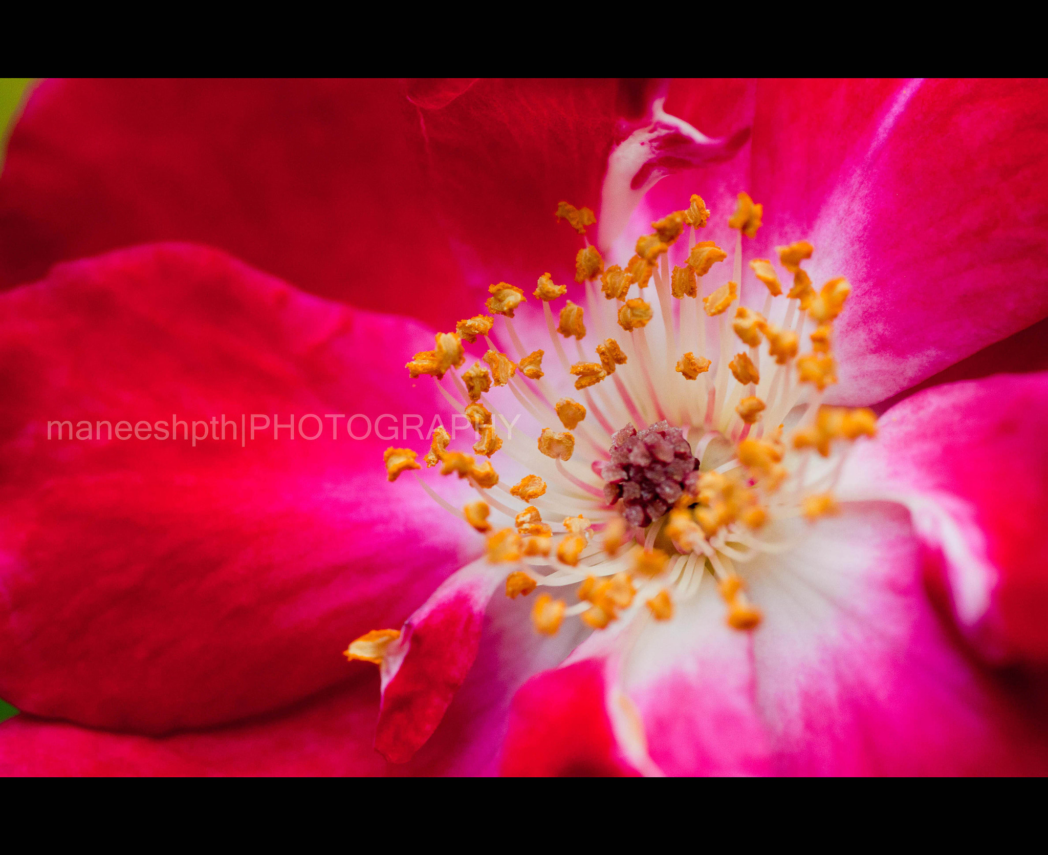 Photograph a closeup... by maneesh p on 500px