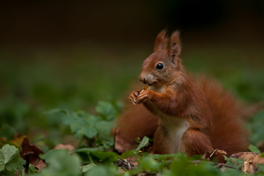 Photograph Yummy by Tobias Kuhl on 500px