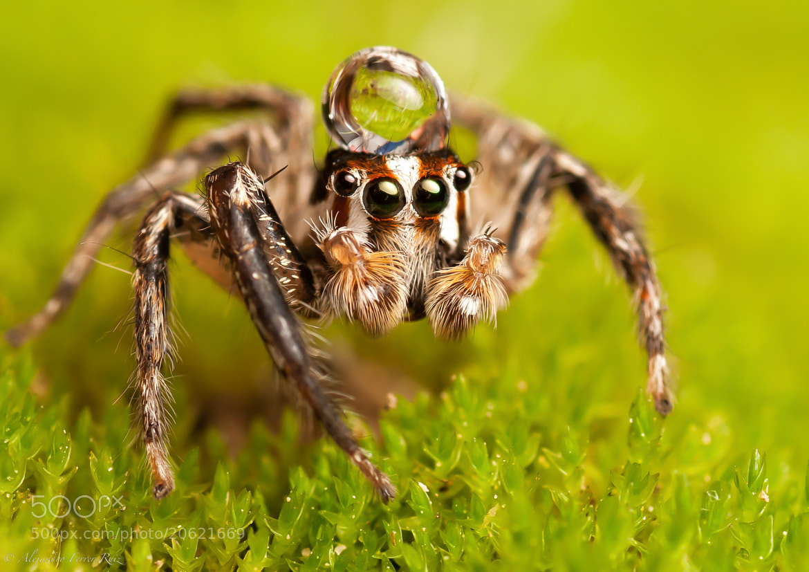 Photograph Araña  by Alejandro  Ferrer Ruiz  on 500px
