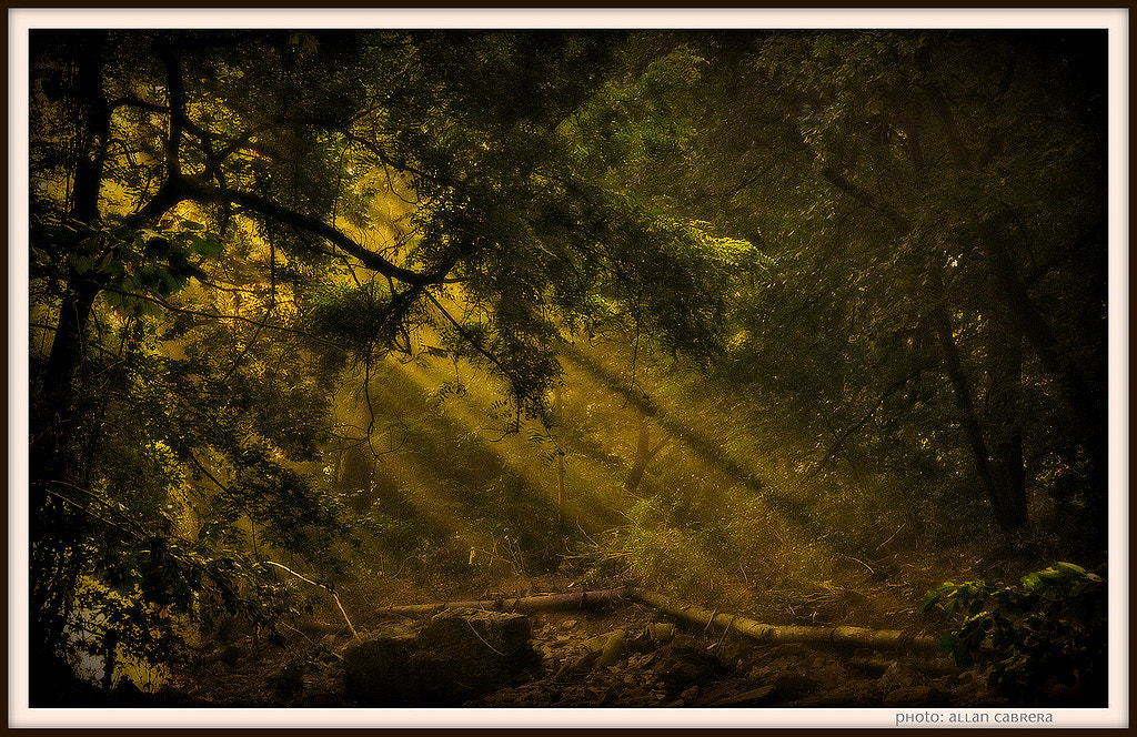 Photograph I see the light by Allan Cabrera on 500px