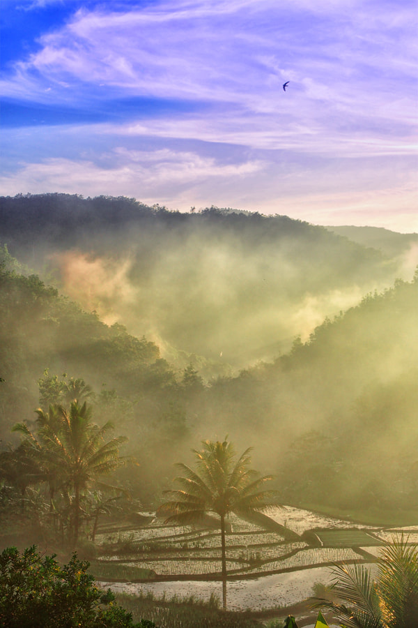 Photograph Fog in the morning by Prabu dennaga on 500px