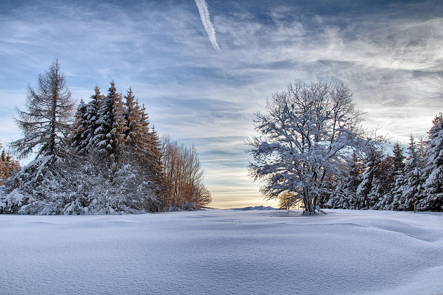 Photograph Snowtree | Black Forest by Matthias Huber on 500px