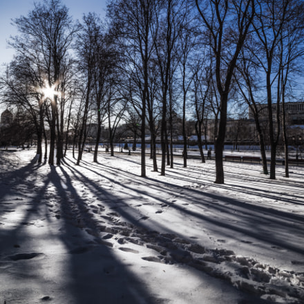 Shadows and trees..., Canon EOS 5D MARK III, Sigma 12-24mm f/4.5-5.6 DG HSM II