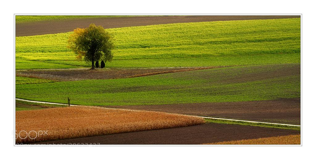 Photograph GrünerHerbst by Herbert_S on 500px