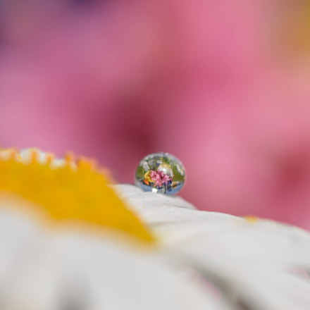 Small World, Nikon D750, AF-S Micro Nikkor 60mm f/2.8G ED