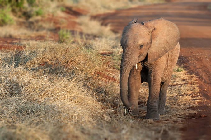 baby elephant by Janet Weldon on 500px