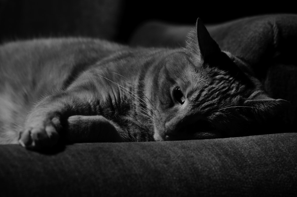 Photograph Yet another cat picture by Dennis Rivera on 500px