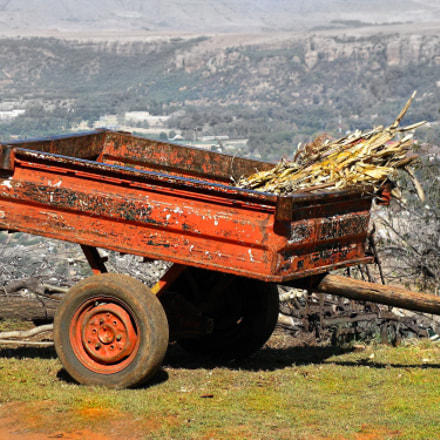 Maize Wagon, Canon POWERSHOT SX100 IS