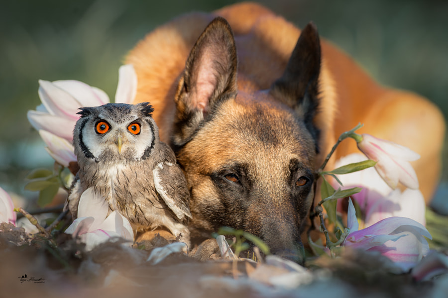 Flowers by Tanja Brandt on 500px.com