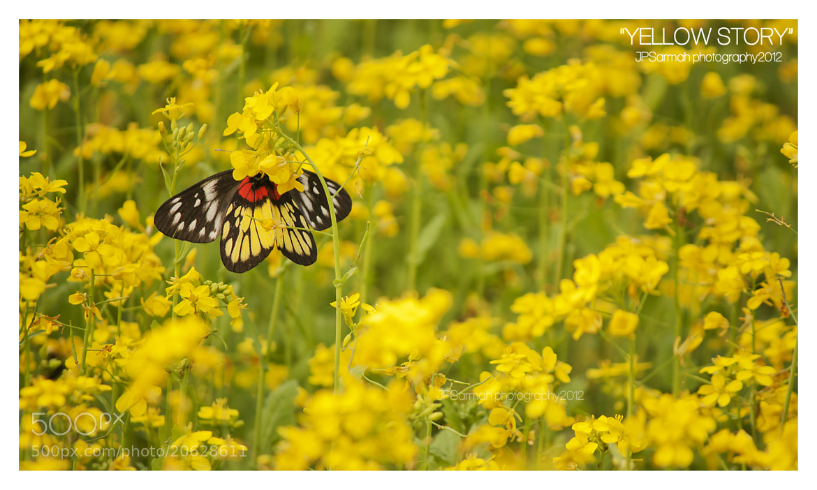 "Photograph ""Yellow Story"" by Jyoti Prakash Sarmah on 500px"