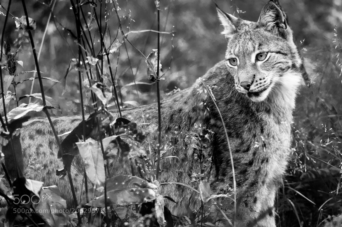 Photograph On The Prowl by Antti Knutas on 500px