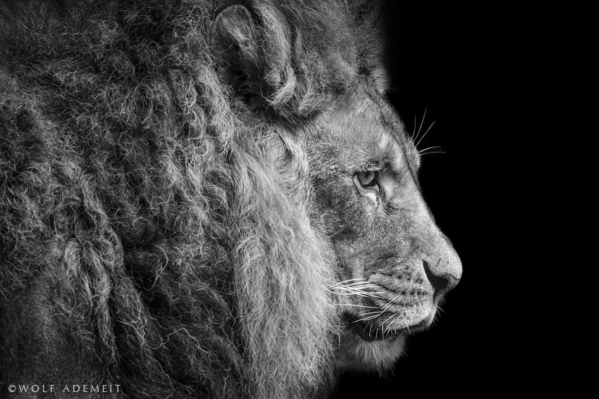 Photograph THE BEAUTY OF THE BEAST by Wolf Ademeit on 500px