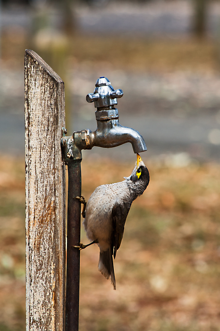 Photograph A Quick Drink by Russ Francis on 500px