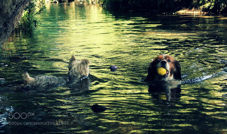 Photograph Ulla river games by Raquel Camurasiquel on 500px