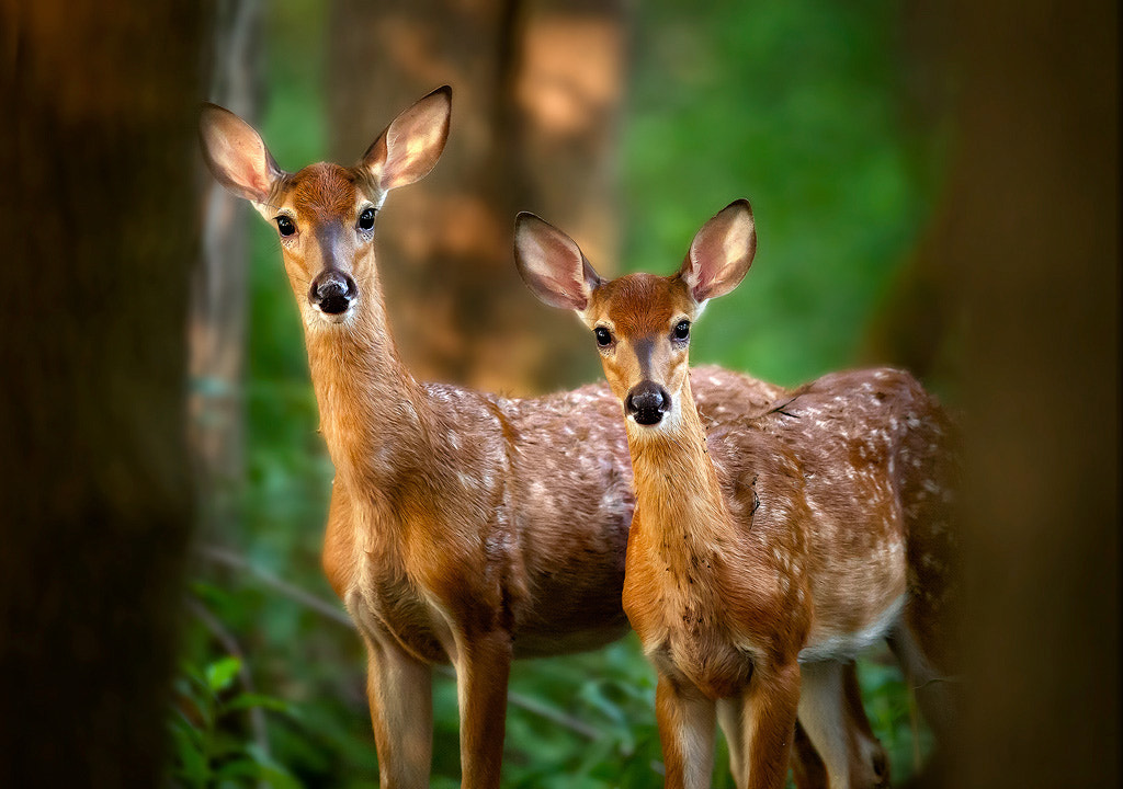 Photograph Sisters by Steve Perry on 500px