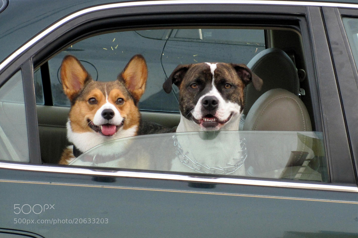 Photograph Are we there yet?? by Ken Carper on 500px