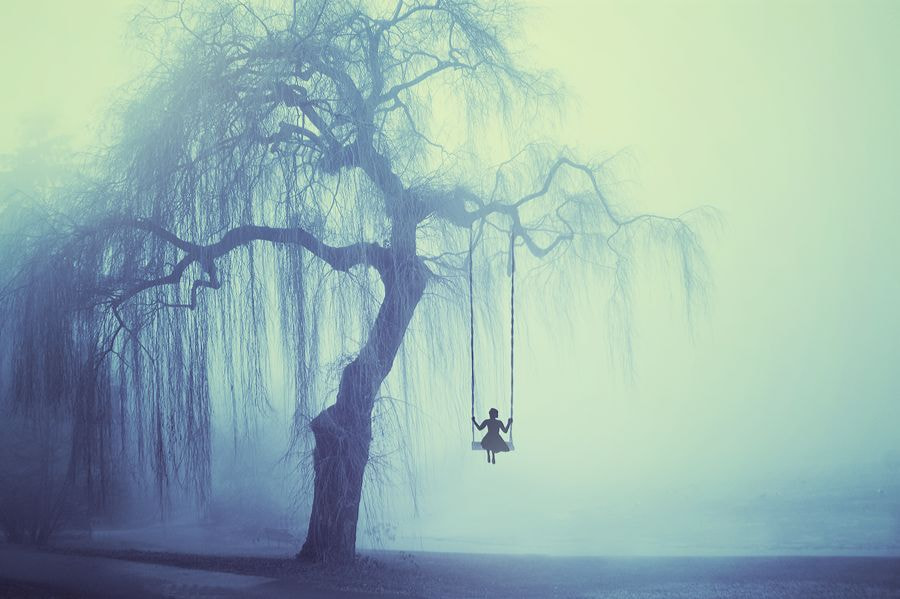 Photograph The Weeping Willow by Felicia Simion on 500px