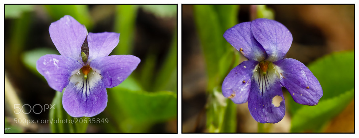 Photograph Diptych by marius2die4  on 500px