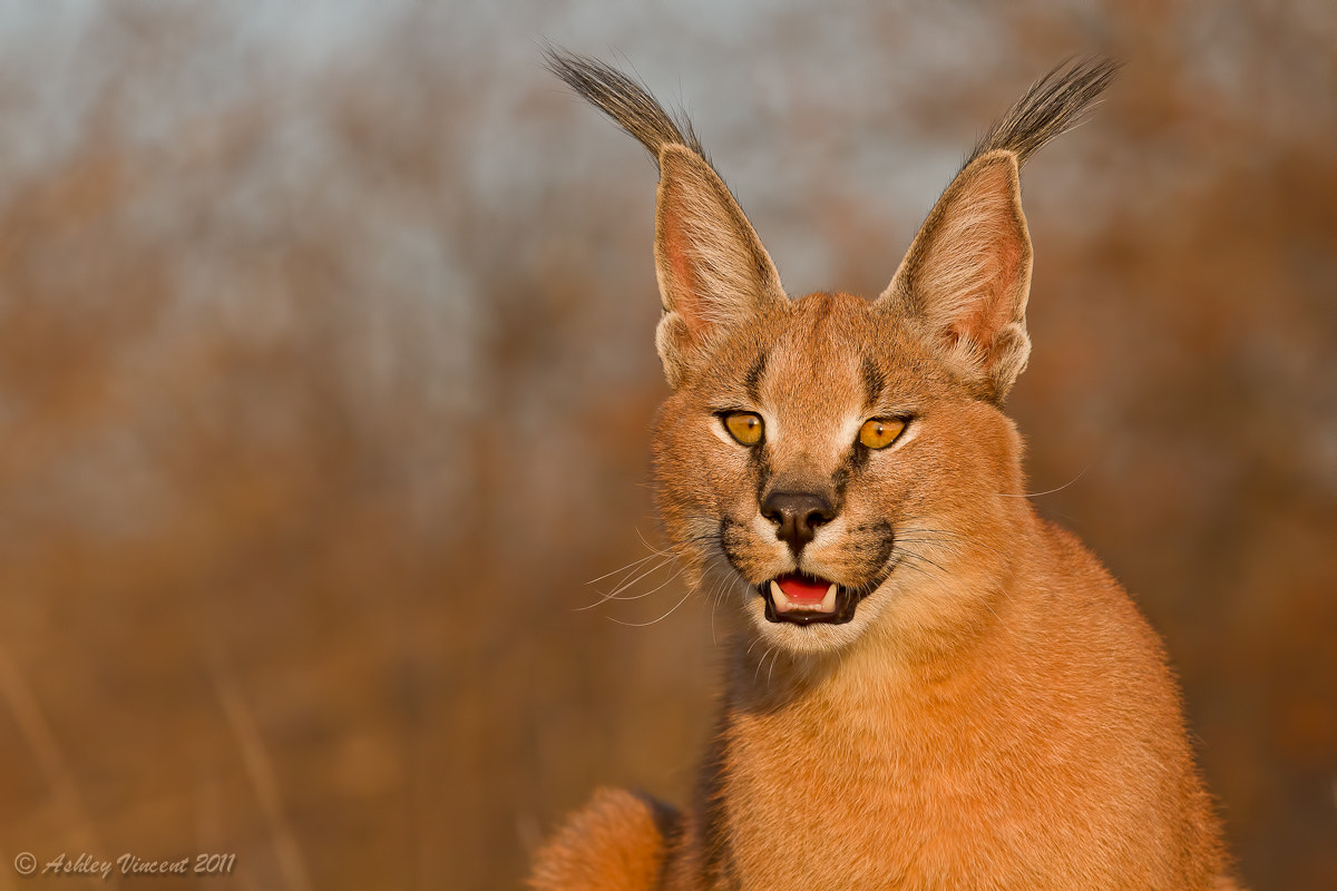 Photograph Portrait of Karoo by Ashley Vincent on 500px