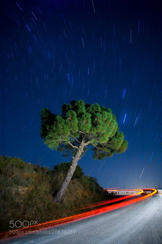 Photograph The Pine and the Road by Rafa García on 500px