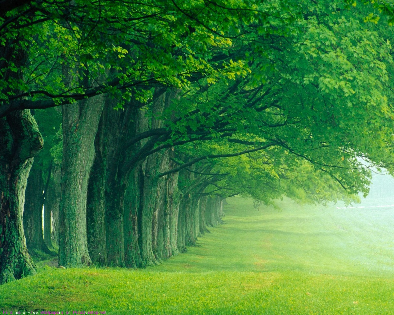 Photograph Beautiful trees in the forest   by Baha Hammad on 500px