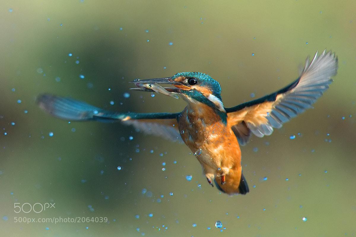 Photograph Blue bubbles by Leonardo Fava on 500px