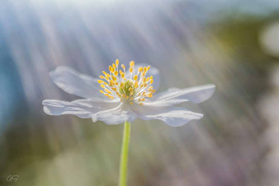 Sun Rays by Annelore Smet on 500px.com
