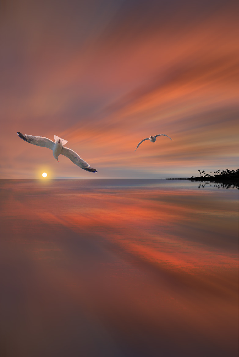 Photograph 2599 by peter holme iii on 500px