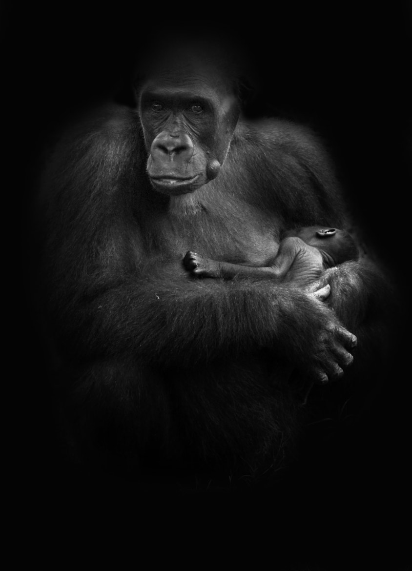 Photograph Mother #2 by Steve Kotler on 500px