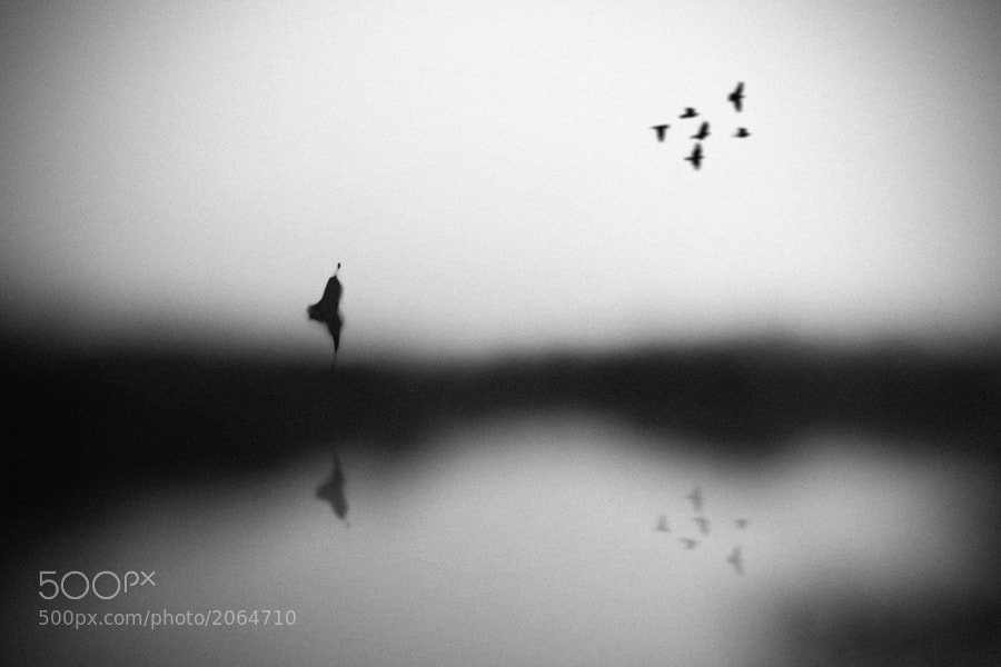 Photograph Conscience by Hengki Lee on 500px
