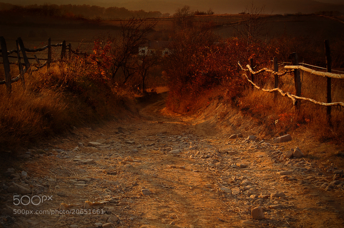 Photograph Country Road by Igas Marius on 500px