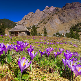 Mountains in bloom by Bogdan D Photographer