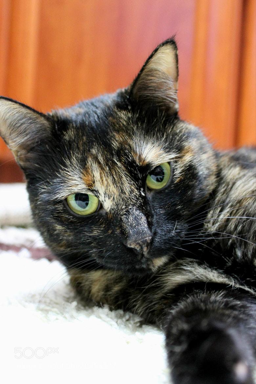 Photograph cat by Liza Khmylova on 500px