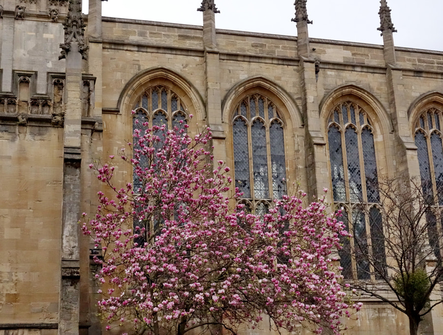 Spring in Oxford, UK by Sandra on 500px.com