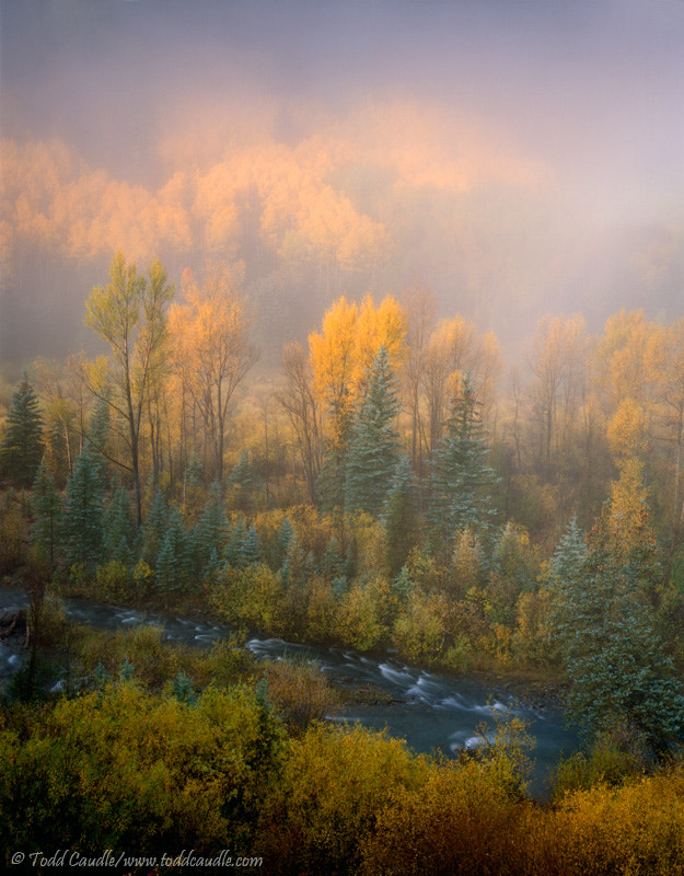 Photograph Autumn fog along the San Miguel River, Colorado by Todd Caudle on 500px