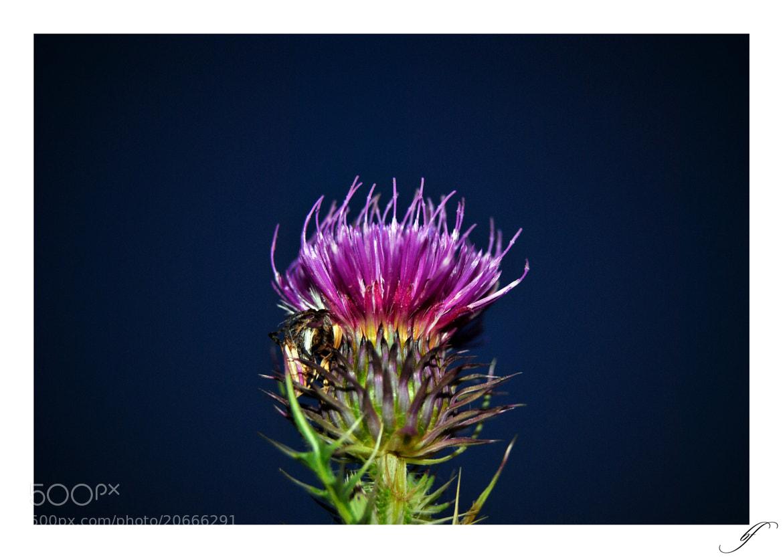 Photograph * by Burim Fejsko on 500px