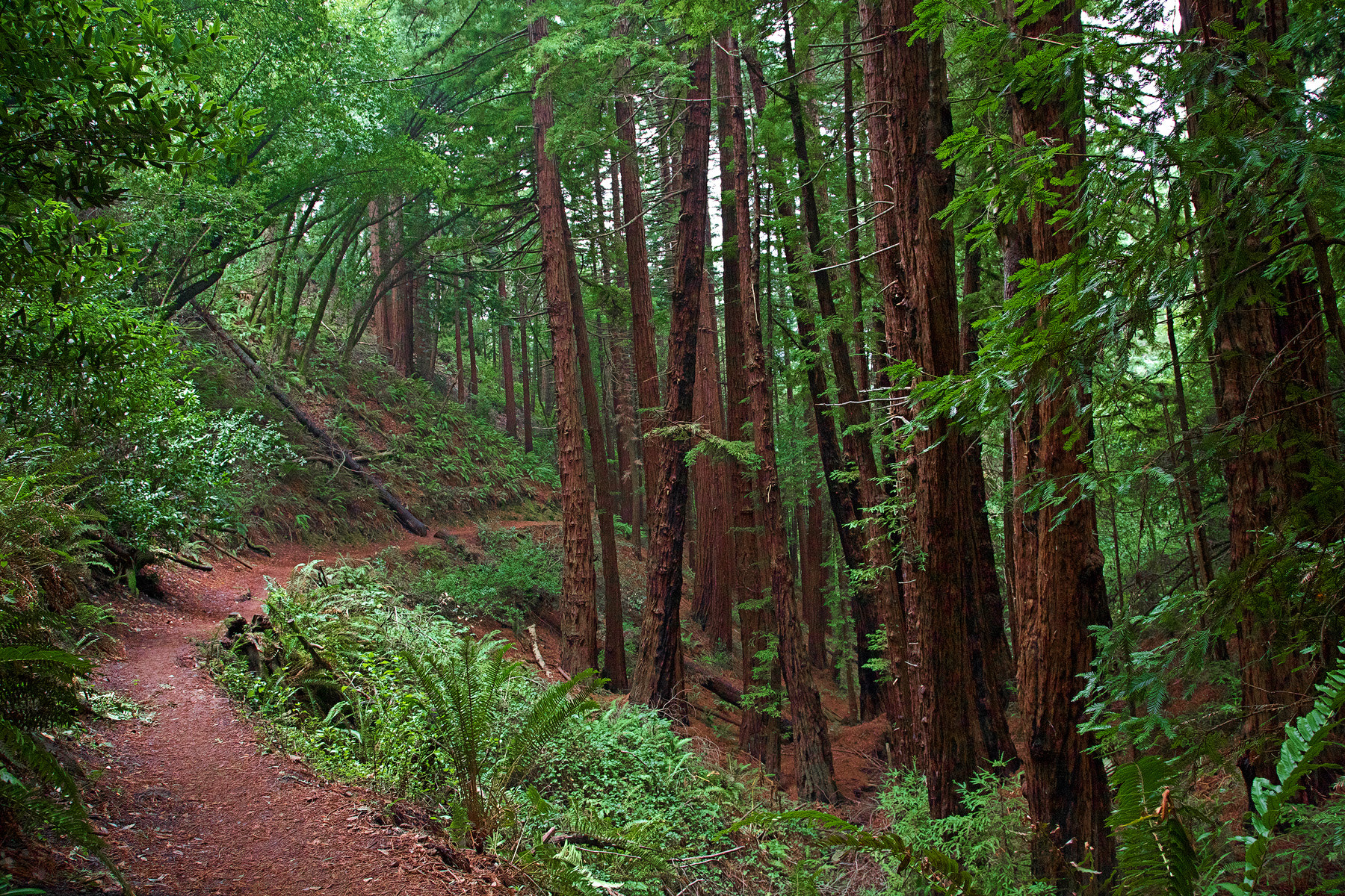 Photograph Hiking Muir Woods by Bill Allred on 500px