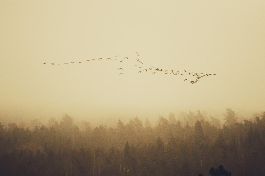 Flight home by Jere Ketola on 500px.com