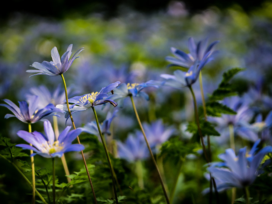 Wild Blue Carpet by David Robinson on 500px.com