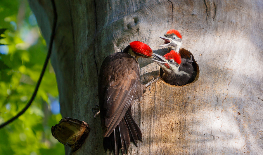 Feeding by Ian McRae on 500px.com