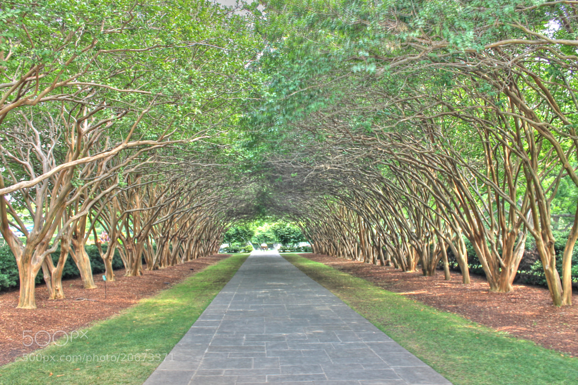 Photograph Tree Tunnel by Janice Marie on 500px