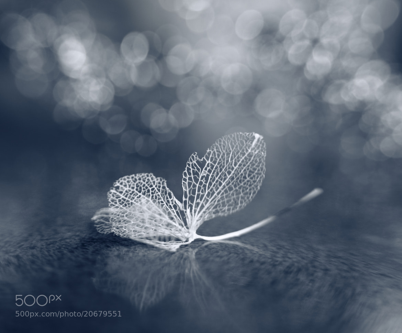 Photograph White fairy by Shihya Kowatari on 500px